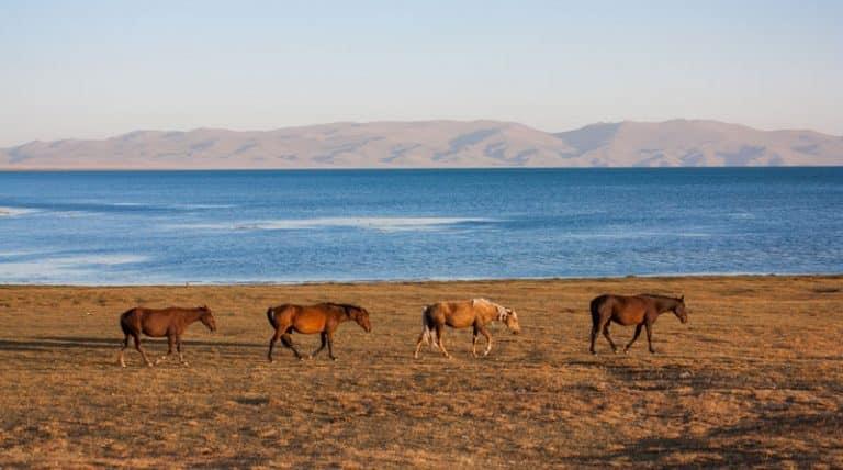 voyage culinaire au sol kirghize